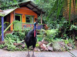 Unique Daintree accommodation at Rainforest Hideaway