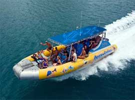 snorkel tour to the Great Barrier Reef